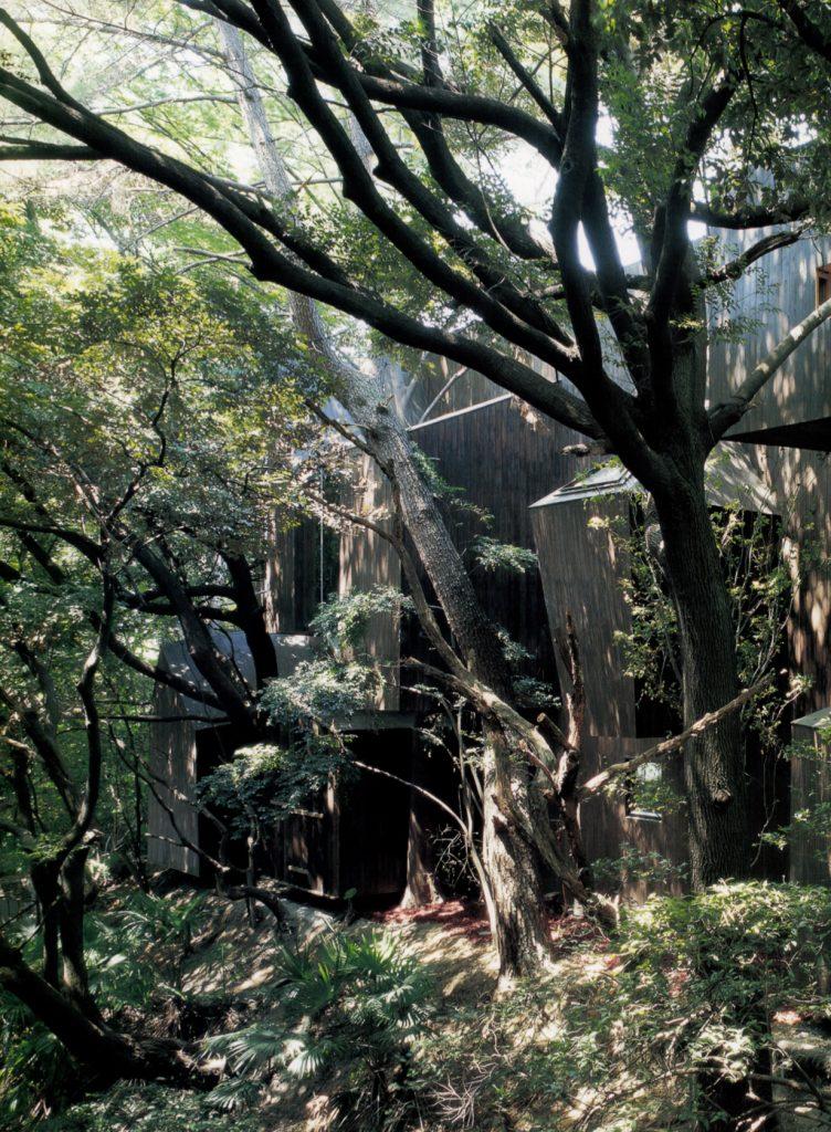 Dancing trees, Singing bird / Hiroshi Nakamura & NAP
